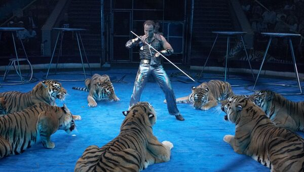 Артур Багдасаров с усурийскими тиграми. Архивное фото