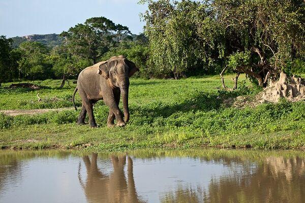 Слон. Архив