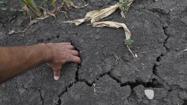 Засуха в Воронежской области