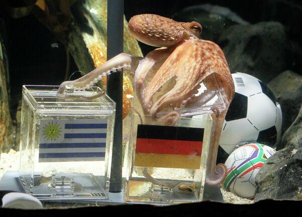 Осьминог Пауль предсказывает победу сборной Германии в матче с Уругваем
