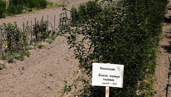 Опытные земли Павловской станции ВИР хотят отдать под коттеджи