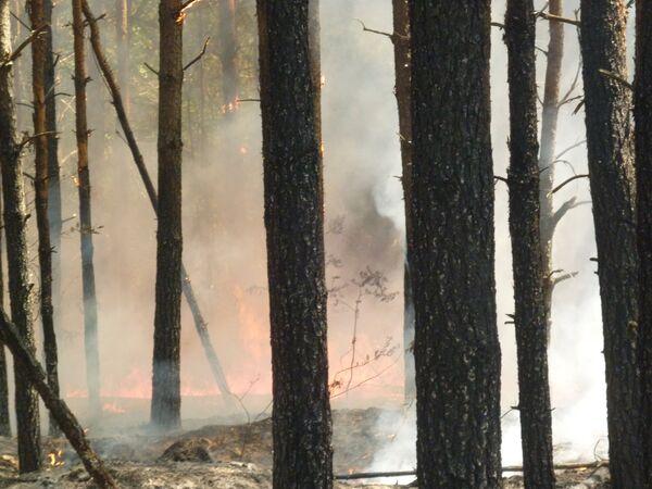 Техники и людей для сдерживания пожаров вокруг Сарова достаточно