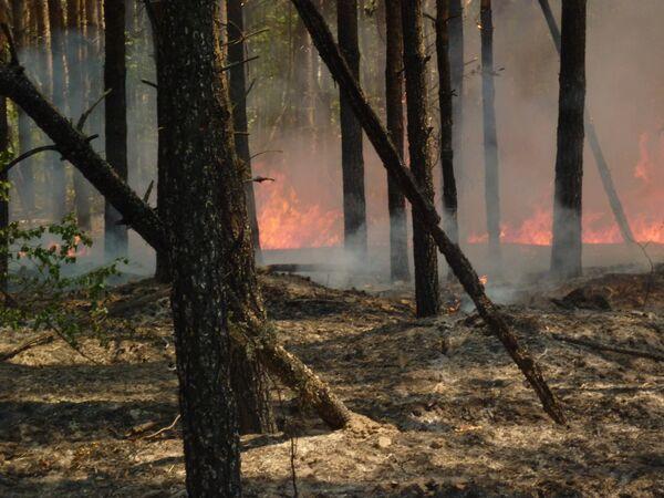 Местные жители тушат пожар в селе Труслейка в Ульяновской области