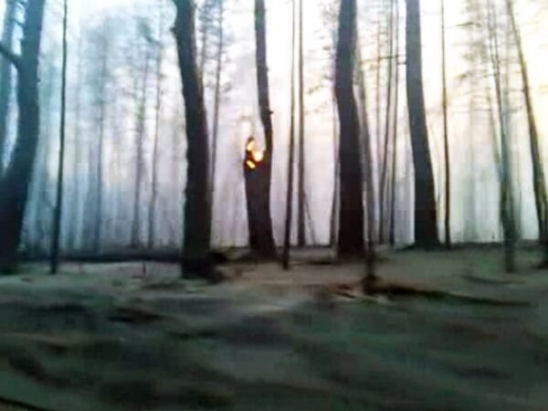 Последствия лесного пожара под Тольятти