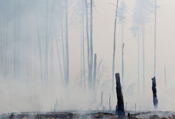 Лесные пожары в Рязанской области