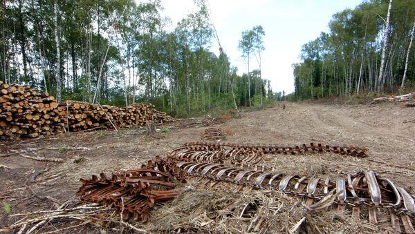 Строительство платной автодороги через Химкинский лес приостановлено. Архив