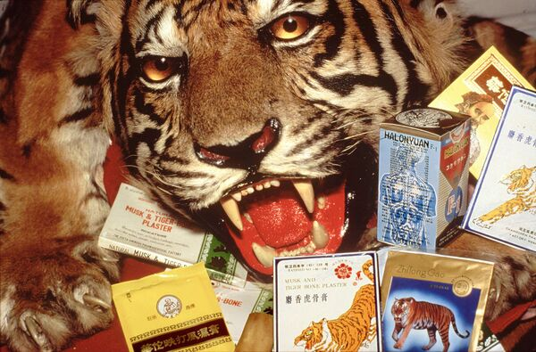 Тигриная шкура и продукты из тигра