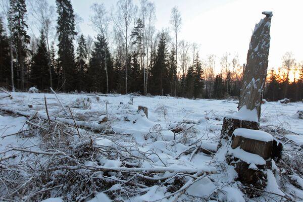 Место будущего строительства трассы Москва-Санкт-Петербург в Химкинском лесу