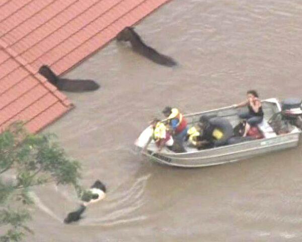 Спасатели на катерах вывозят из зоны затопления лошадей и коров