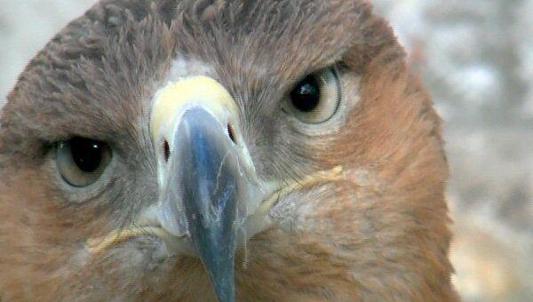 Прообраз российского двуглавого орла стал символом Ульяновской области