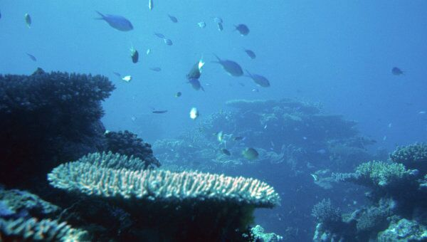 Коралловый риф у побережья Австралии