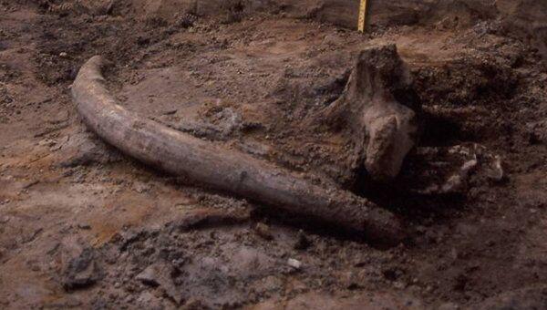 Раскопки на стоянке Бызовая в Республике Коми