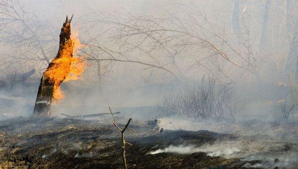Пожары в Шотландии уничтожили четверть территории заповедника
