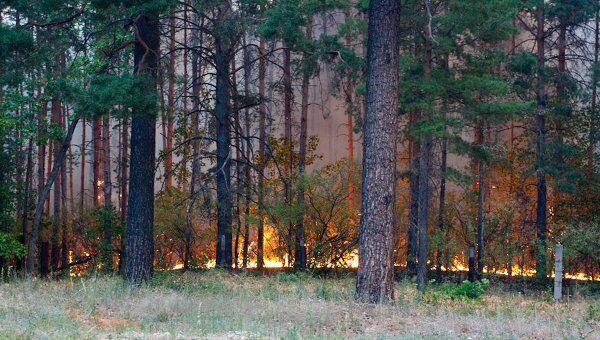 Лесные пожары в Тольятти в августе 2010