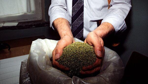 Более 1,5 кг марихуаны изъято в Великом Новгороде у местного жителя
