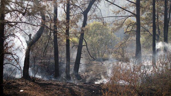 Борьба с пожарами в Коломне