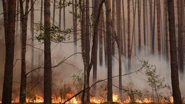 Природные пожары. Архив.