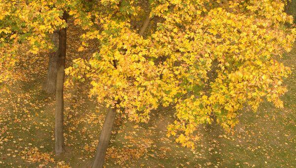 Золотая осень. Архив
