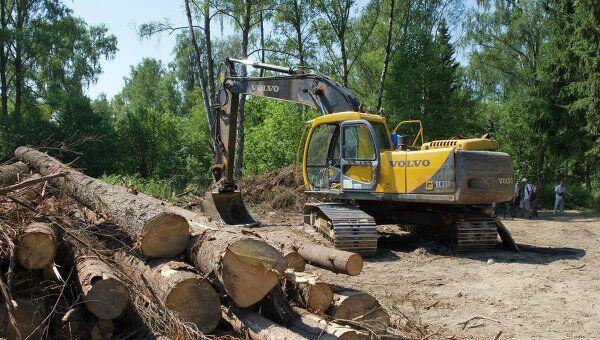 Вырубка Химкинского леса началась в районе аэропорта Шереметьево