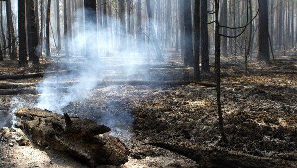 Тушение лесного пожара в Воротынском районе Нижегородской области. Архив