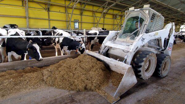 Молочная ферма. Архивное фото.