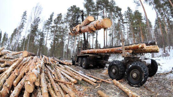 Рубка леса. Архивное фото