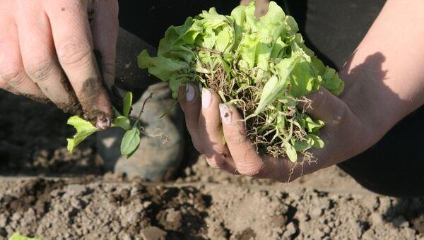 Весенне-полевые работы в фермерском хозяйстве Калининградской области