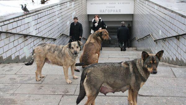 Карантин по бешенству введен в двух районах Москвы