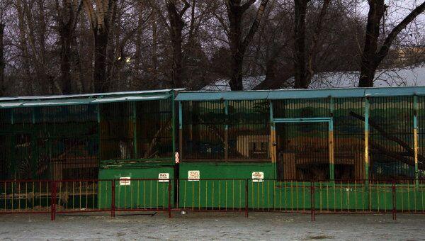 Передвижной зоопарка Лигер в Благовещенске, в котором тигр напал на ребенка