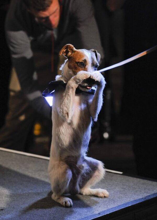 Кинопремия для собак Golden Collar Award
