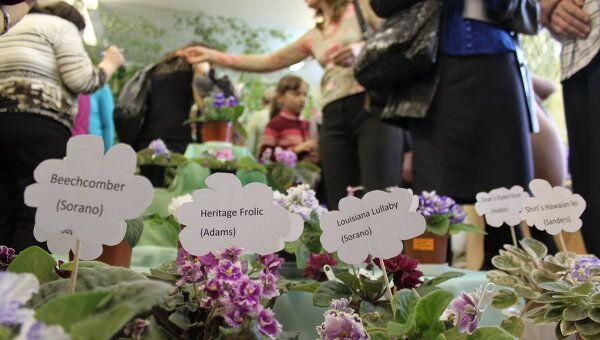 Набережные Челны выставка фиалки цветы