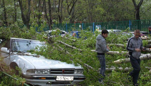 Ураган обрушил дерево на автомобили на востоке Москвы