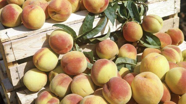 Персики. Архивное фото.