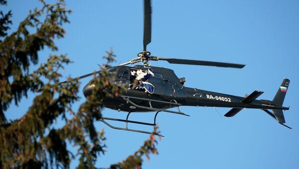 Из тайги новогоднюю красавицу обычно доставляют вертолетом. Архивное фото