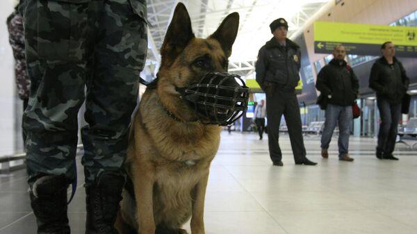 Сотрудники правоохранительных органов с собакой