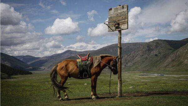 Белгородская область «Монгол-Баскетбол»