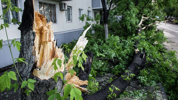 Поваленное ветром дерево