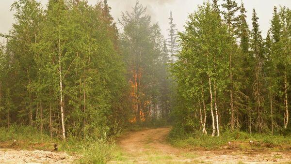 Тушение природного пожара в районе села Пельвож
