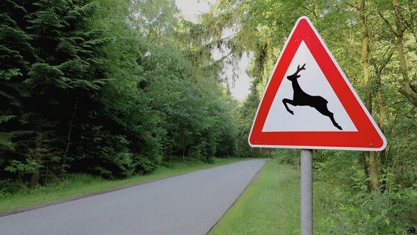 Дорожный знак Осторожно дикие животные