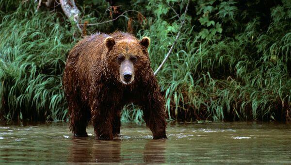 Медведь. Архивное фото.