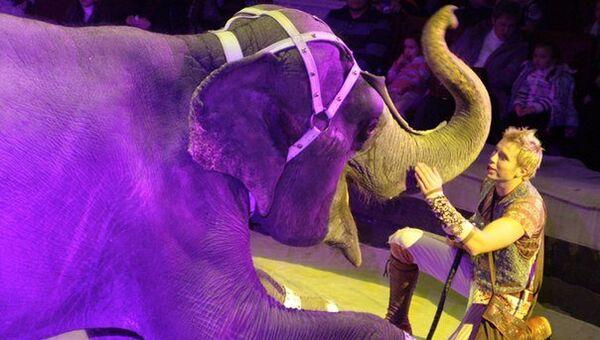 Аттракцион Дрессированные слоны артиста Российской государственной цирковой компании Андрея Дементьева-Корнилова