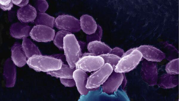 Ученые из университета Дьюка в Дареме исследовали грибок вида Cryptococcus neoformans