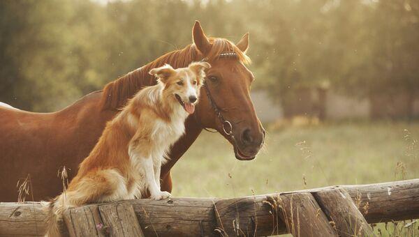 Собака с лошадью