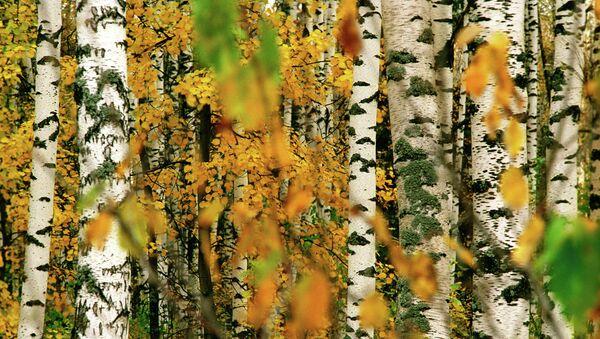 Лесопромышленный комплекс может занять важное место в экономической структуре Югры