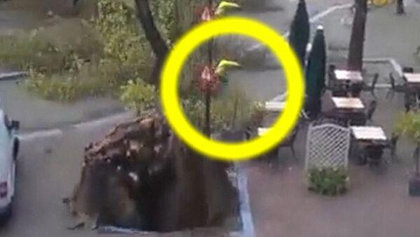 Велосипедист чудом спасся от вырванного ветром дерева в Амстердаме