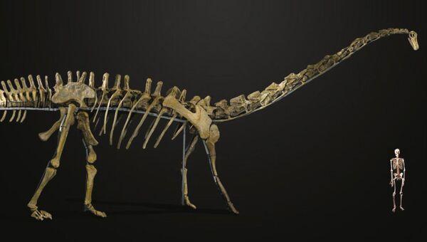 Скелет гигантского динозавра был продан на аукционе Summers Place Auctions за $650 тысяч