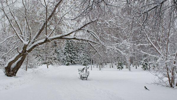 Заснеженный парк. Архивное фото