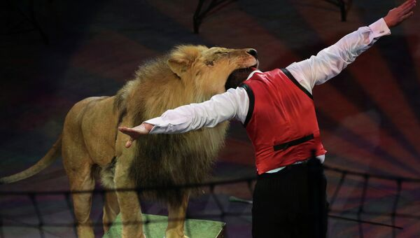 Дрессировщик кладет голову в пасть льва, архивное фото