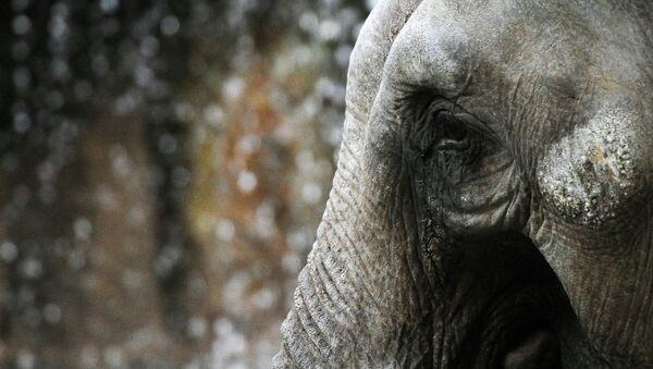 Слон. Архивное фото