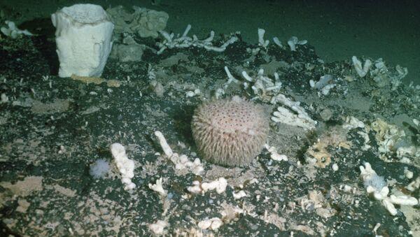 Морские губки и кораллы. Архивное фото